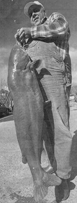 60-pound Blue Catfish
